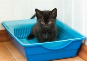 How Many Litter Boxes per Cat Should You Have