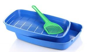 How Often Should You Clean a Litter Box