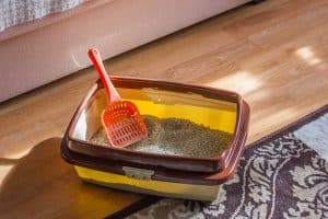 Where to Put the Litter Box? a Concise Room-By-Room Guide