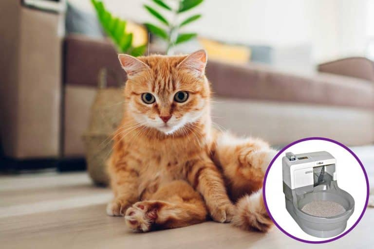 The Miraculous Cat Genie Litter Box – Will It Work for You?