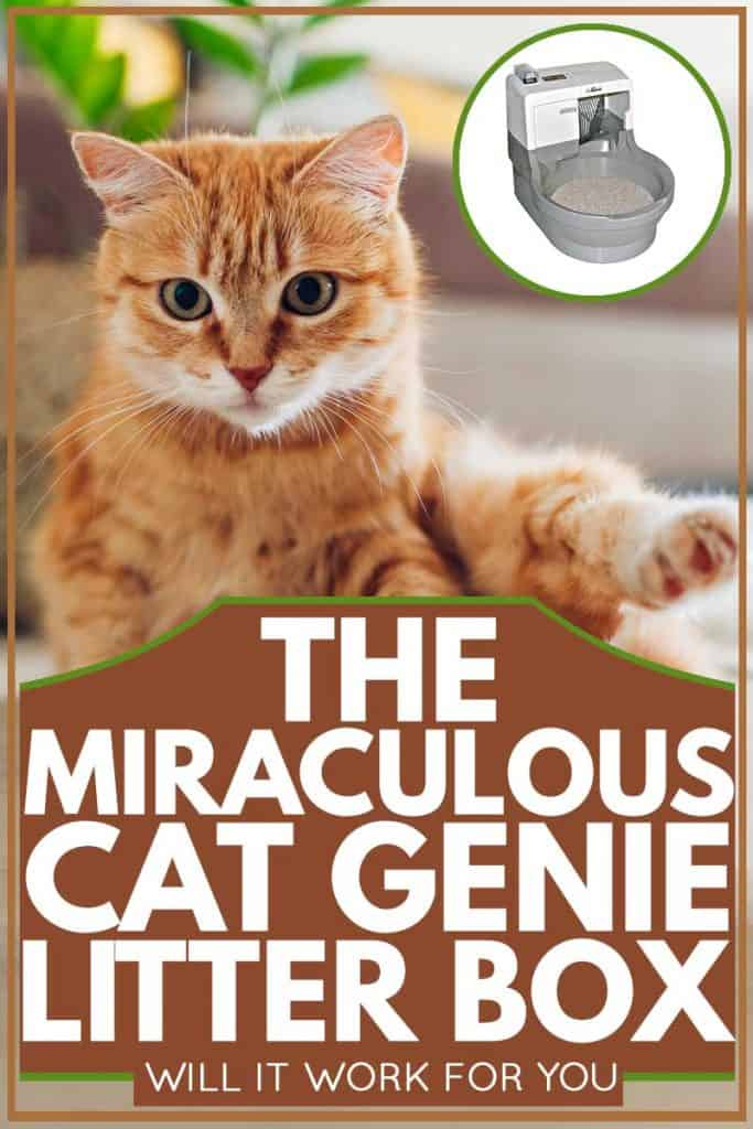 Ginger cat looking at floor after cleaning himself, The Miraculous Cat Genie Litter Box - Will It Work for You?