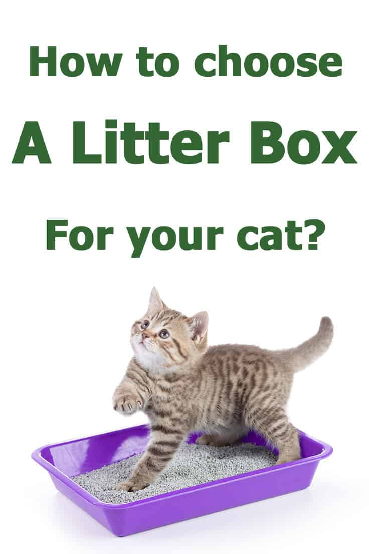 How to choose a litter box that will be a good fit for your cat (and for you as well)