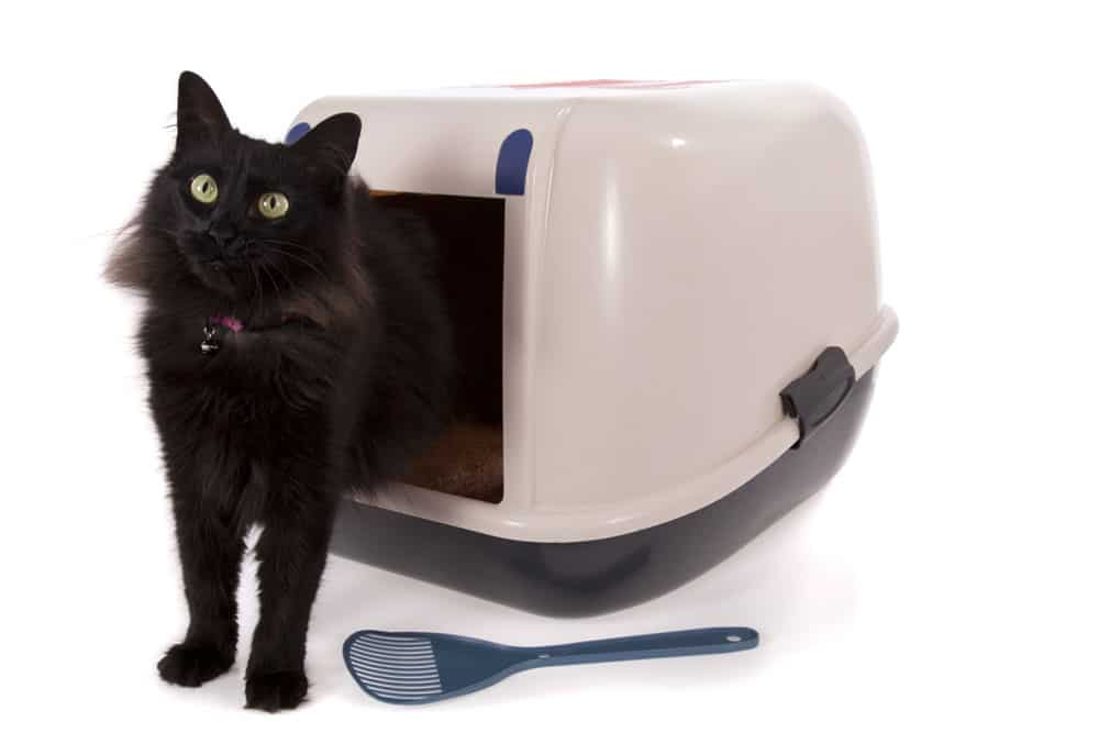 How to choose a litter box: Covered vs. non-covered