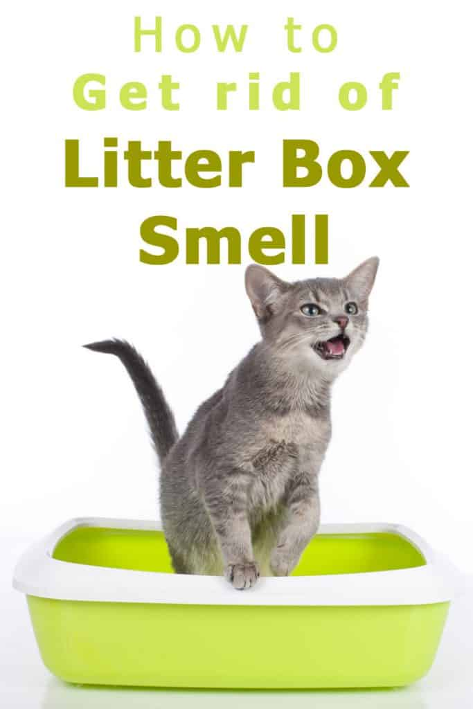 How to get rid off litter box smell - All the solutions (and also what not to do)