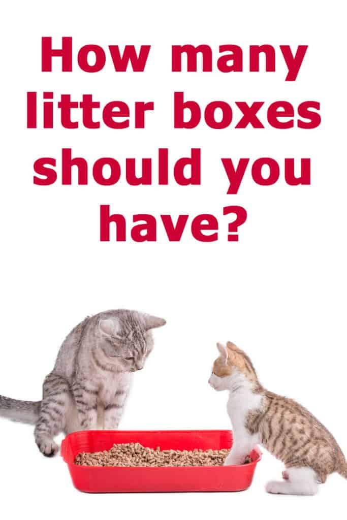 How many litter boxes should you have?