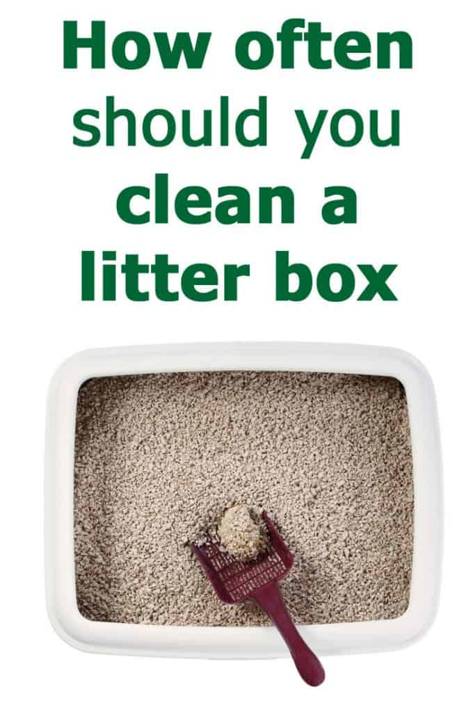 How often should you clean a litter box? The complete guide