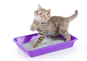 Not sure how to choose a litter box for your cat? Let us help!