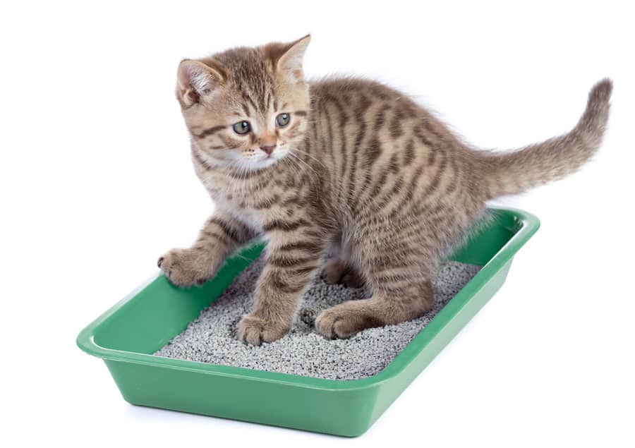 Will your kitten go to the litter box or should you teach a cat to use the litter box?