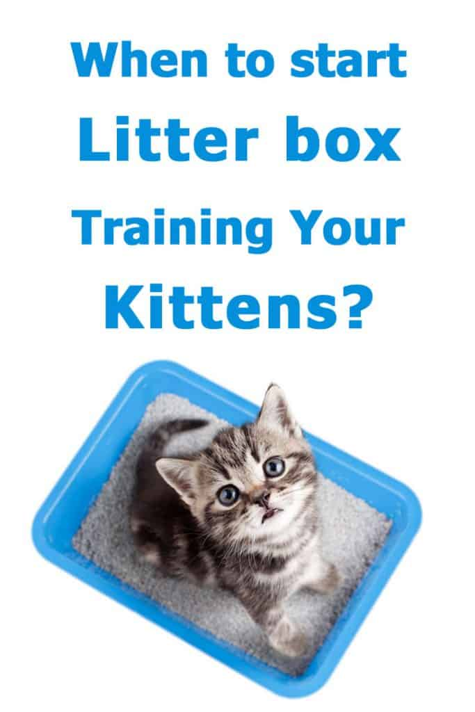 When to start litter box training kittens? The complete guide to answer all your questions