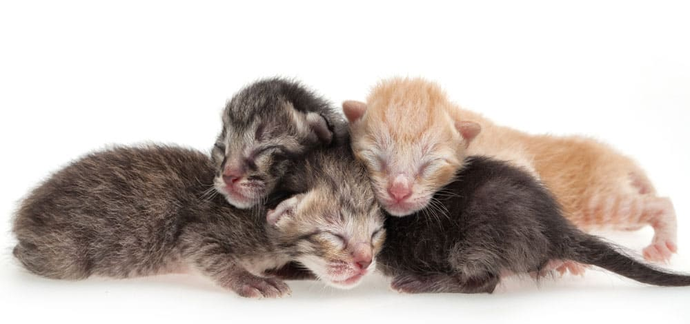 Newborn kittens - don't worry about when to start litter box training kittens when they're this young!