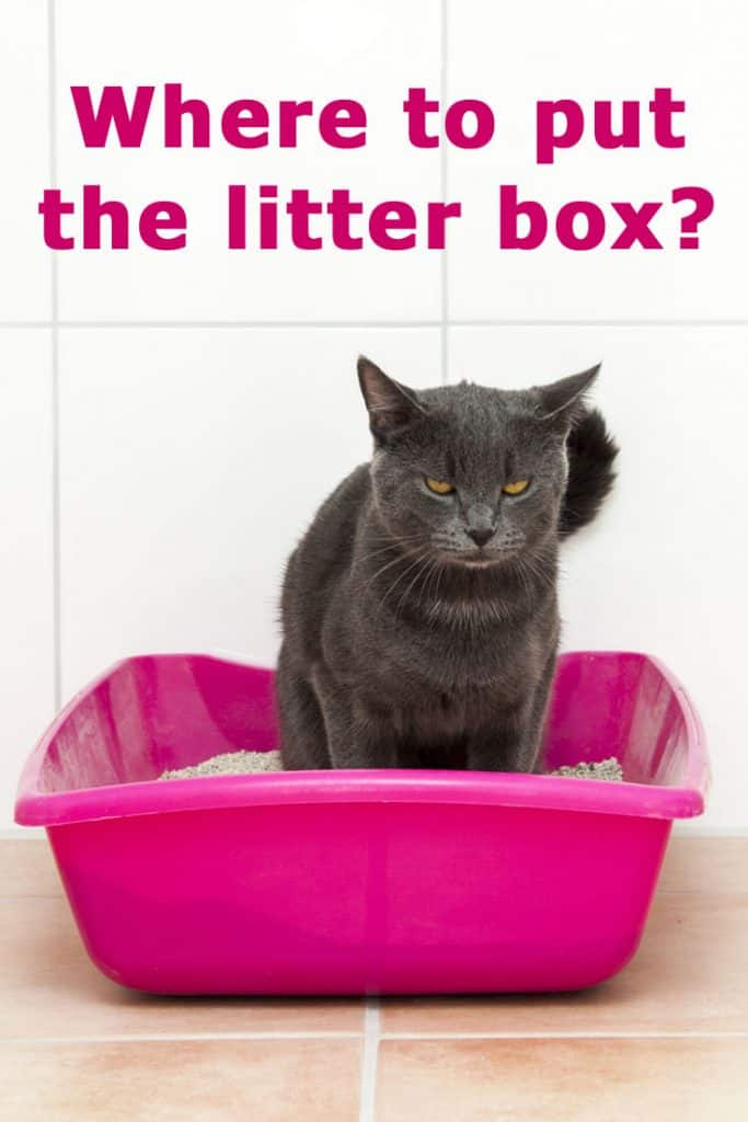 Where To Put The Litter Box A Concise, Litter Box In Unfinished Basement