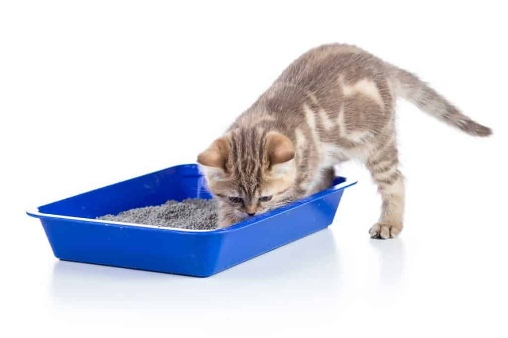 Cute kitten scratching a blue litter box