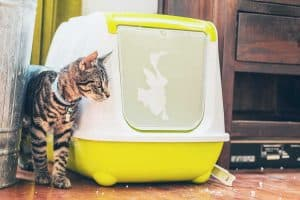 Do Cats like Covered Litter Boxes