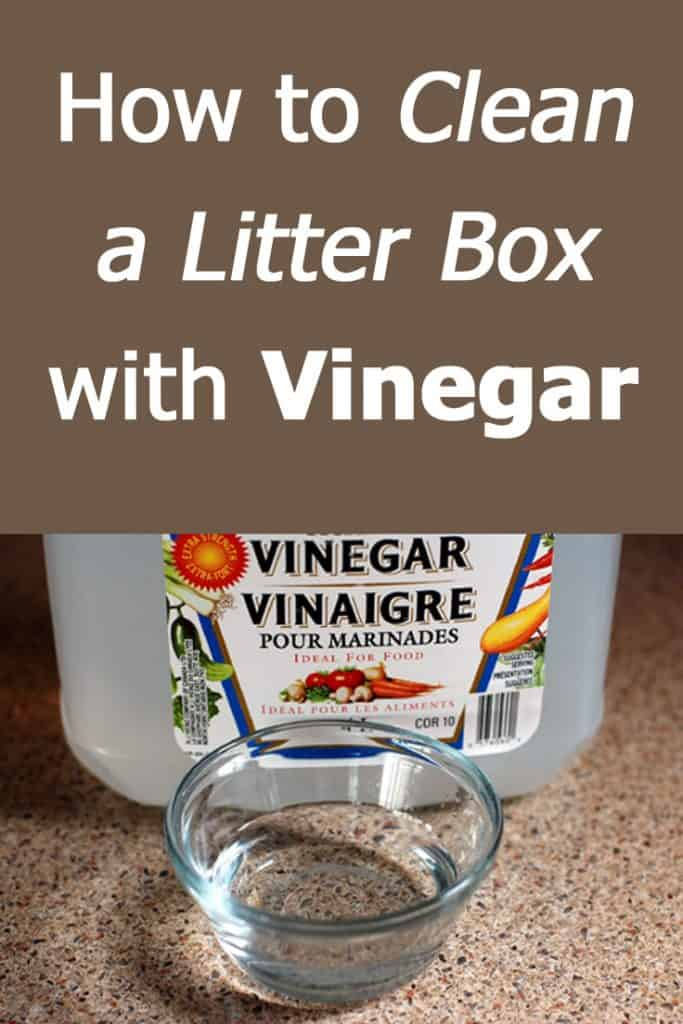 How to clean a litter box with vinegar