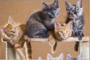 How many litter boxes per cat should you have?