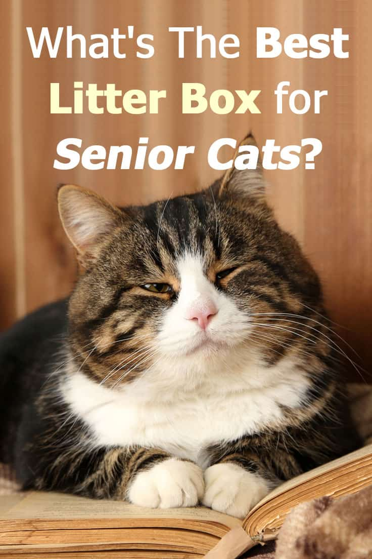 What's the best litter box for senior cats? Read our detailed guide to find out.