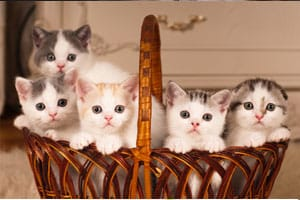When to start litter box training kittens?