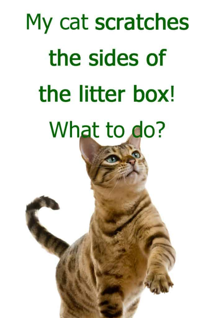 My cat scratches the sides of the litter box - what to do?