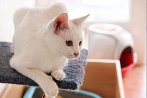 Where to put the litter box? A room-by-room guide