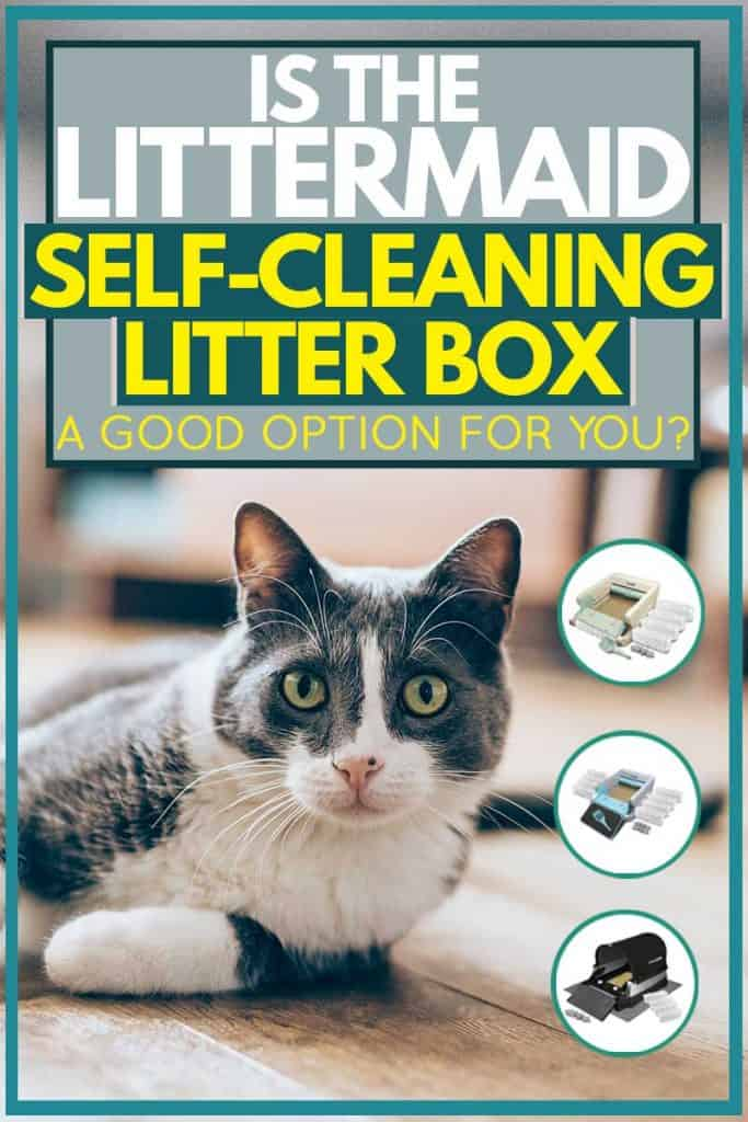 Littermaid self-cleaning litter boxes collage picture, Is the Littermaid Self-Cleaning Litter Box a Good Option for You?