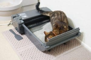 How Much Does an Automatic Litter Box Cost