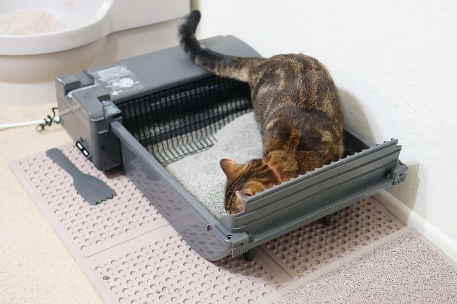 How Much Does An Automatic Litter Box Cost Litter Boxes Com