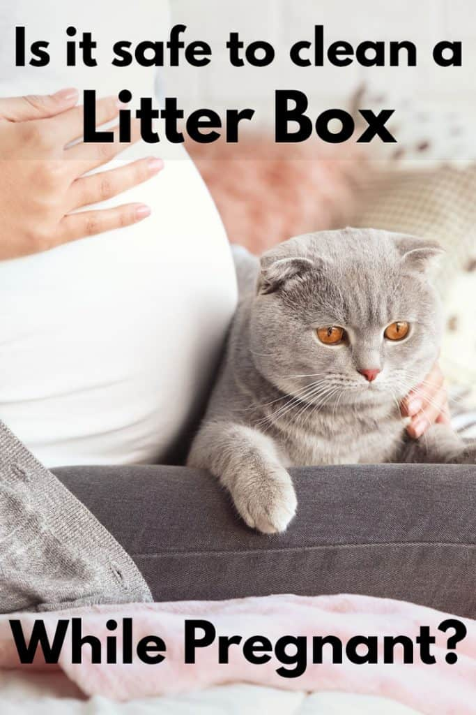 Is It Safe To Clean A Litter Box While Pregnant - Litter-Boxescom-8233