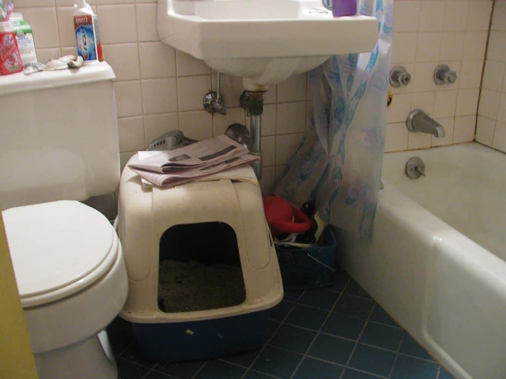 Litter Box in the Bathroom