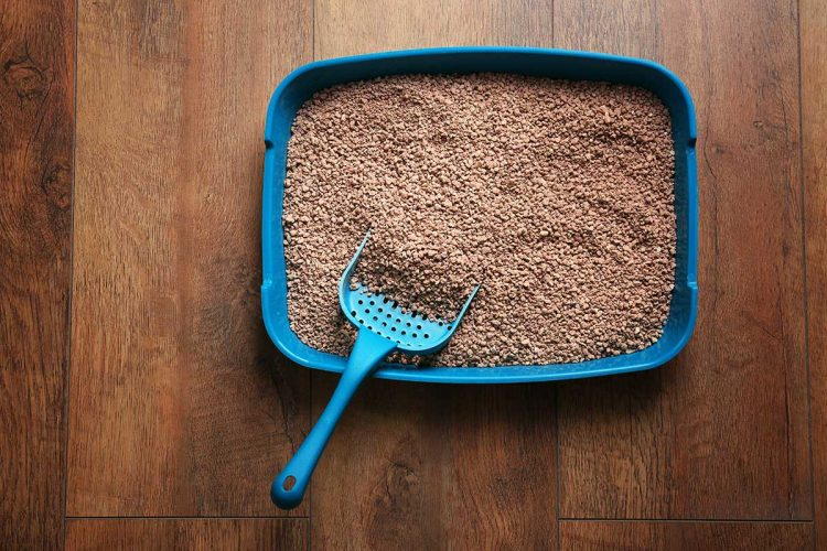 How to Get Rid of Used Cat Litter the Right Way