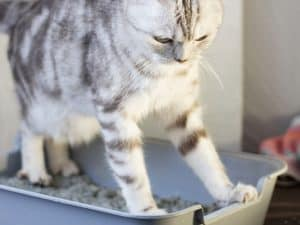 Is Your Cat's Litter Box Too Small?