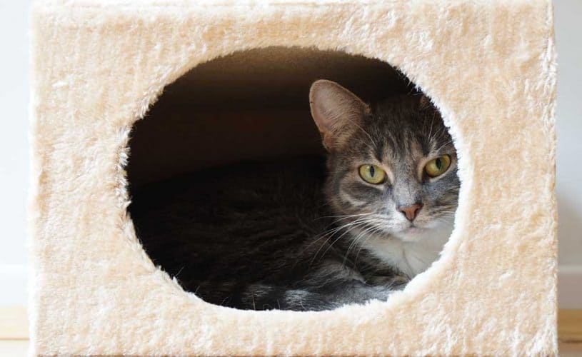 Where Can You Hide The Litter Box (And Should You)