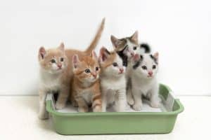 Will My Cats Share a Litter Box? [And is that REALLY a good idea?]