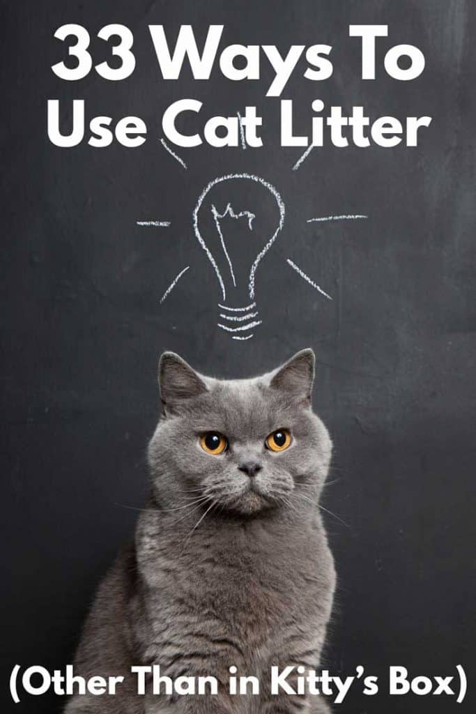 33 Ways to Use Cat Litter (Other Than in Kitty's Box)