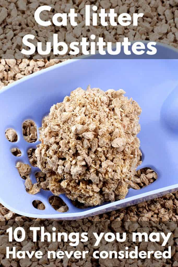 Cat Litter Substitutes – 10 Things You May Have Never Considered