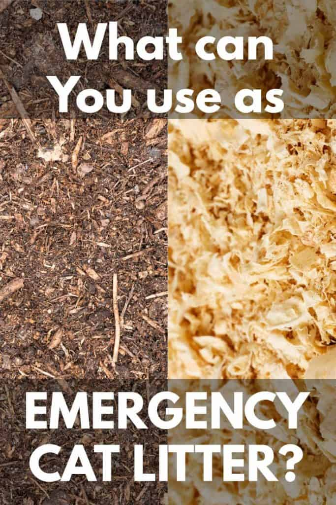What Can You Use as Emergency Cat Litter?