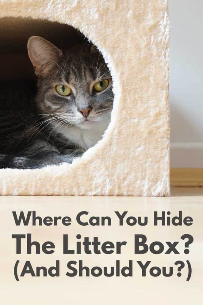 Where Can You Hide The Litter Box? (And Should You?)