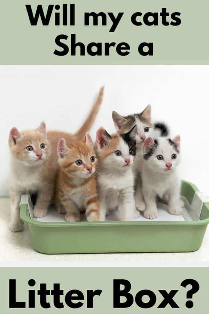 Will My Cats Share a Litter Box?