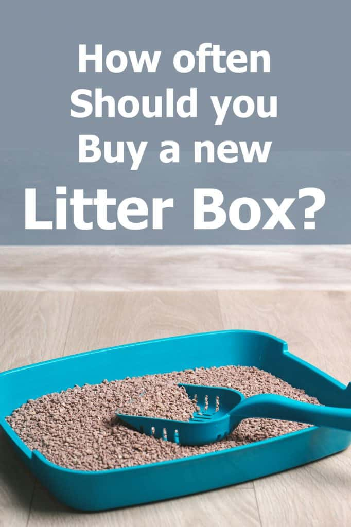 How Often Should You Buy a New Litter Box?