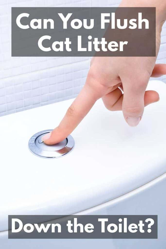 Can You Flush Cat Litter Down the Toilet?