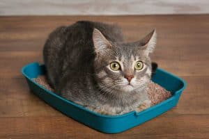 Best Litter Boxes for Odor Control
