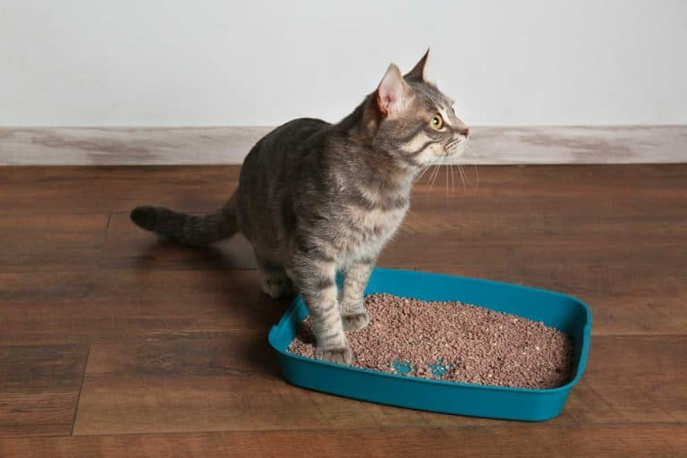 Can You Flush Cat Litter Down The Toilet Litter Boxes Com