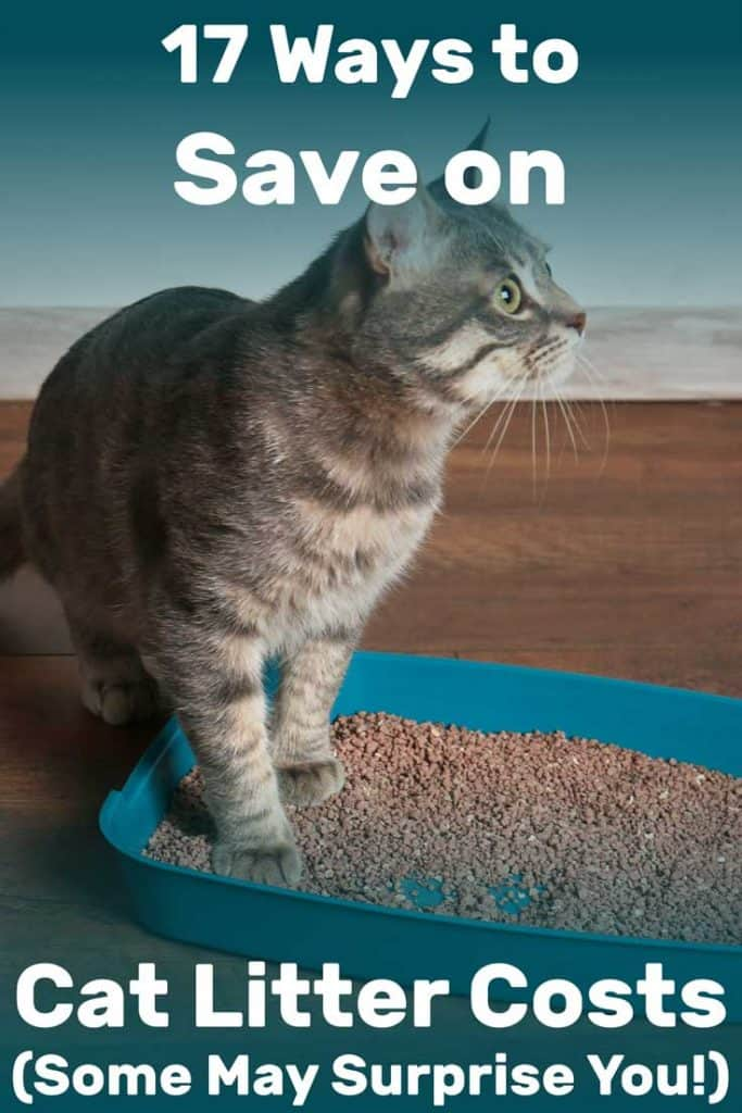 17 Ways to Save on Cat Litter Costs (Some May Surprise You!)