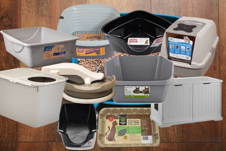The 10 Types of Litter Boxes