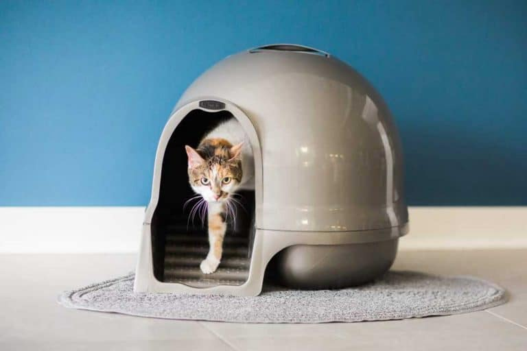 16 Litter Tracking Prevention Tips for Cat Owners