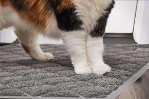 Read more about the article Top 17 Litter Box Mats That Will Help You Fight Litter Tracking