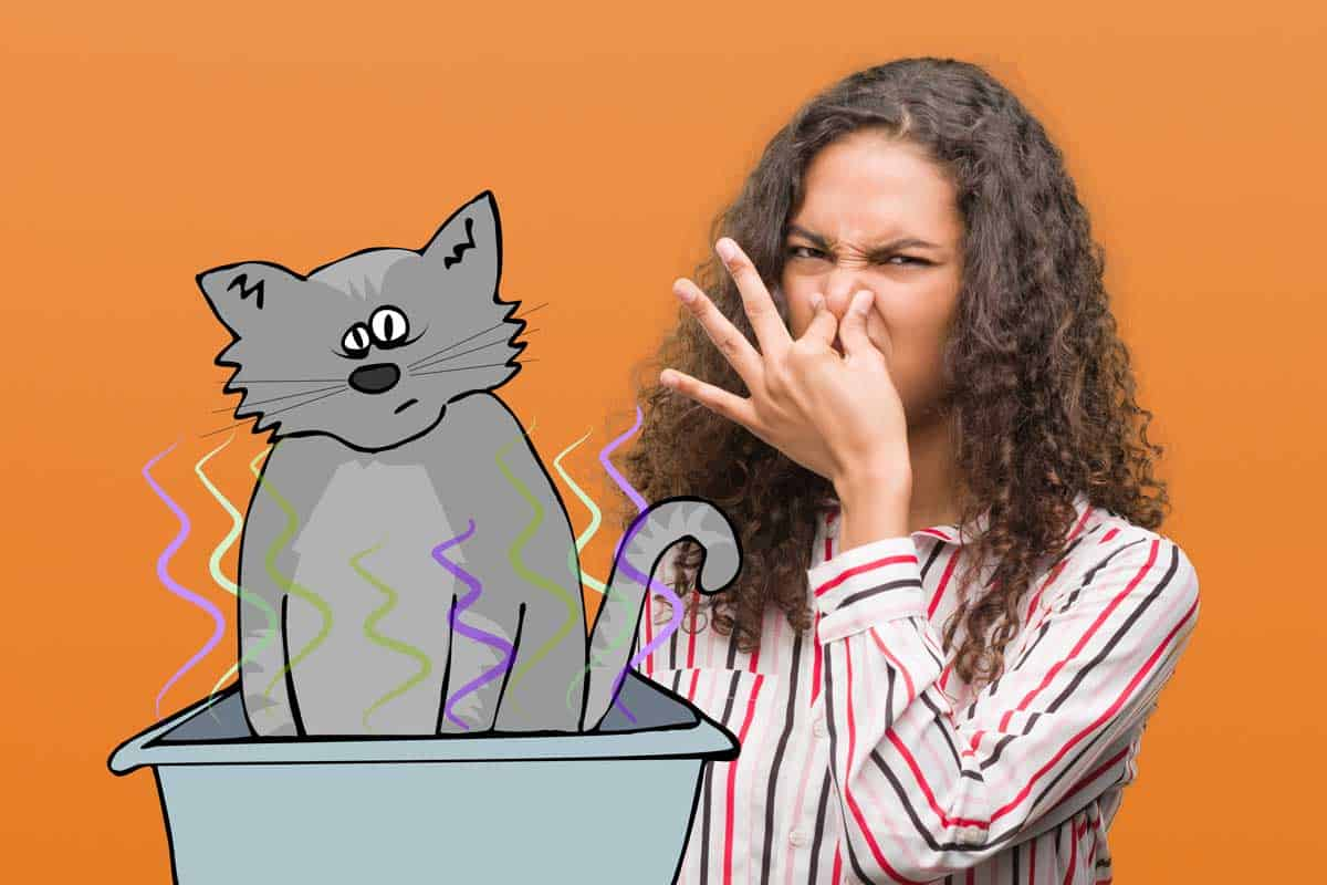 The Cat's Litter Smells like Ammonia - What to Do? - Litter