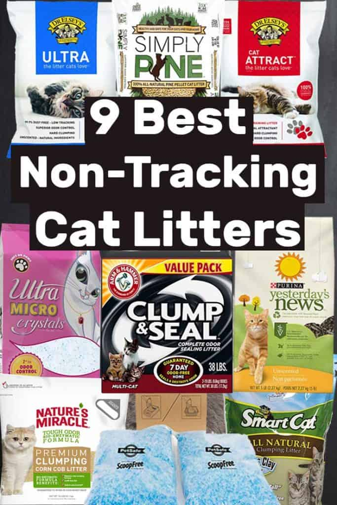 9 Best Non-Tracking Cat Litters