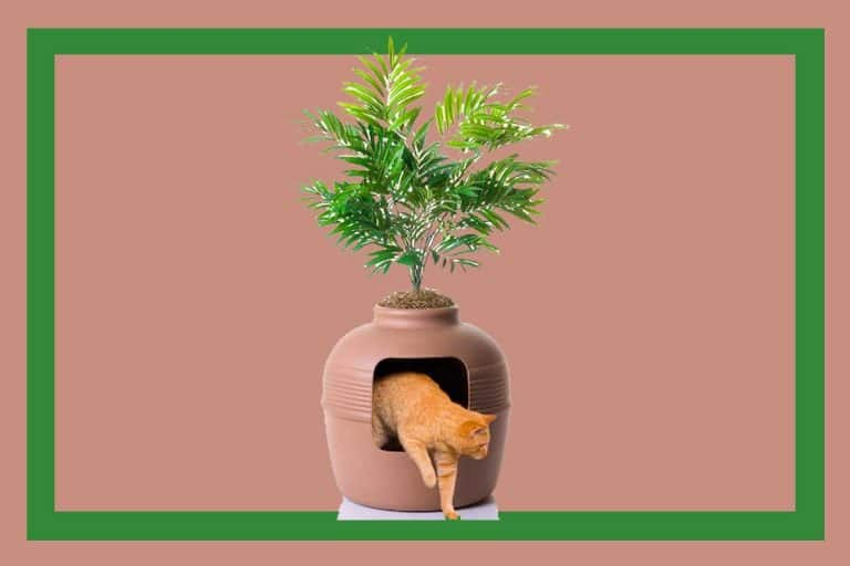 30 Hidden Litter Boxes You Should Check Out