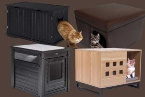 9 Litter Box Benches You Should Check Out