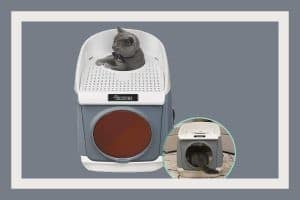 Best Top-Entry Litter Boxes